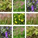 Pack :  collection de plantes couvre-sol
