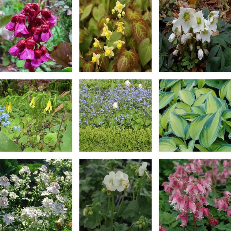 collection de petites plantes d 39 ombre jardin ou pot es. Black Bedroom Furniture Sets. Home Design Ideas