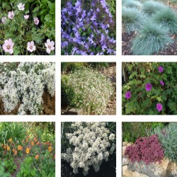 Pack : collection de petites plantes de soleil
