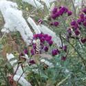 plantes vivaces d 39 ombre rustiques et p rennes achat vente en ligne le jardin d 39 adou. Black Bedroom Furniture Sets. Home Design Ideas