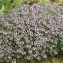 Plantes aromatiques et potagères