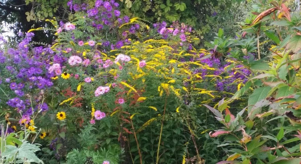 Le Jardin d'Adoué en automne