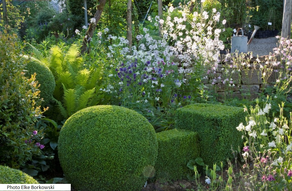 Plantes vivaces rustiques achat vente et conseil le for Plante de jardin vivace