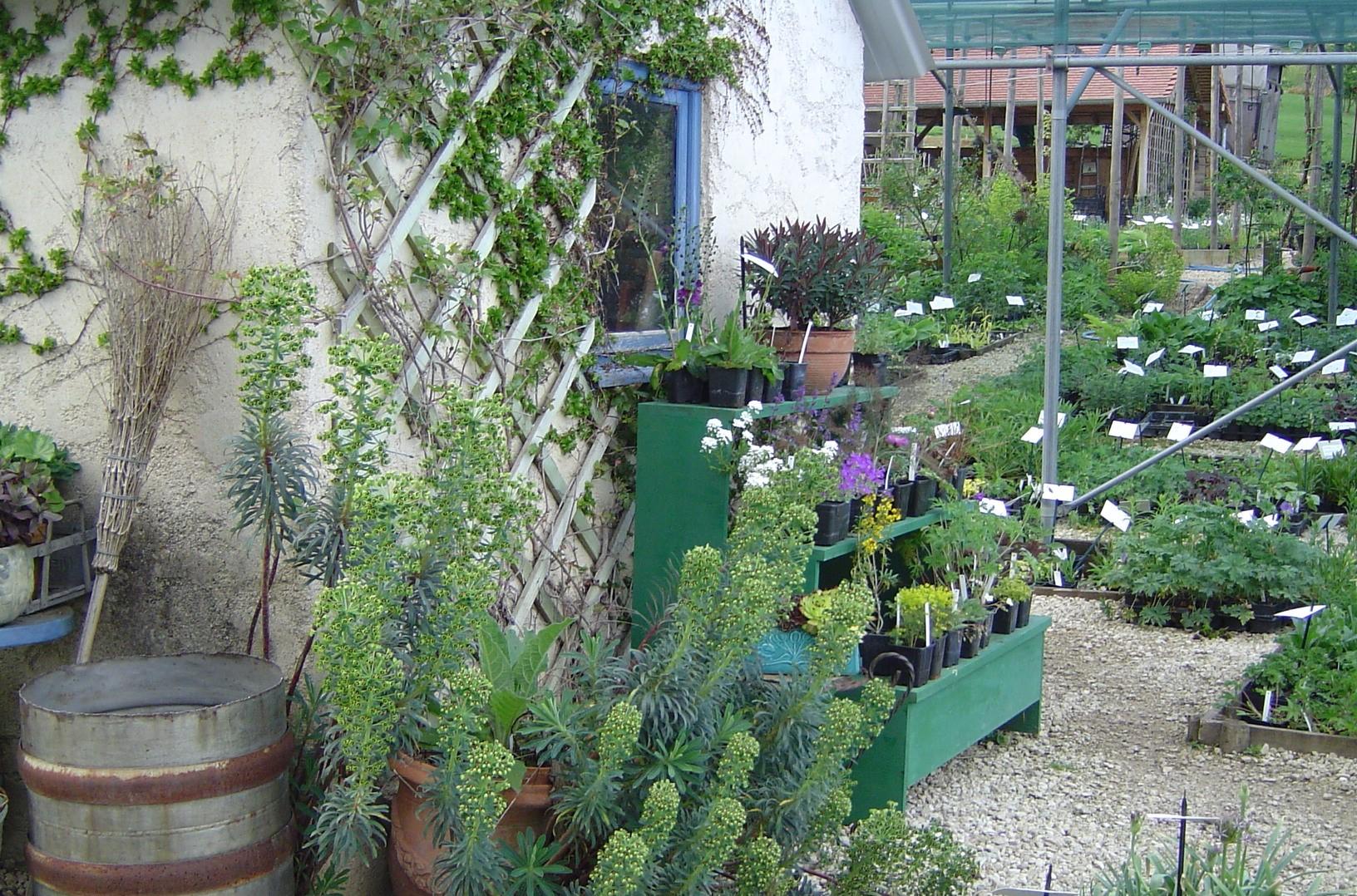 Plantes vivaces de collection rustiques et originales for Plantes vivaces rustiques